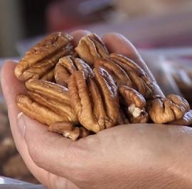 Pekanové ořechy a účinky na zdraví