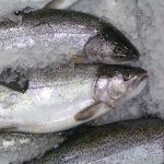 Jak vybrat správnou rybu, abyste svému zdraví skutečně prospěli?