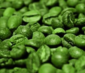 Nejvyšší koncentrace kyseliny chlorogenové se nachází v zelených kávových zrnkách a také v extraktu z těchto kávových zrn.