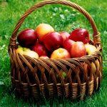 Pektin a jeho vliv na zdraví – na co je dobrý a jaké jsou jeho zdroje?
