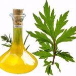 Pelyňkový olej a jeho účinky na zdraví – kdy vám pomůže?