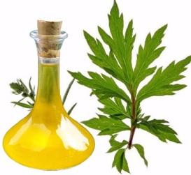 Pelyňkový olej a jeho účinky na zdraví - kdy vám pomůže?
