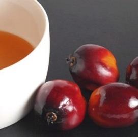 Palmojádrový olej (olej z palmových jader) - jaké jsou jeho účinky?