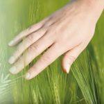 Antioxidanty v zeleném ječmeni a zelených nápojích