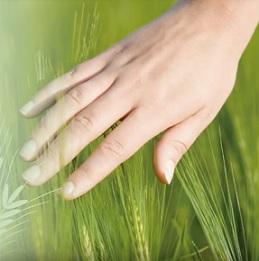 V zeleném ječmenu najdete antioxidanty.