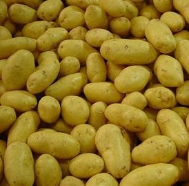 Brambory jsou dobrým zdrojem sacharidů.