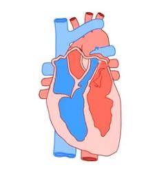Trápí vás palpitace srdce? Upravte životní styl a nechte se vyšetřit lékařem.