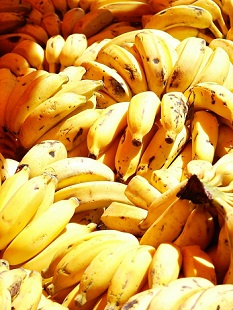 Tak co, zkusíte banánovou dietu?