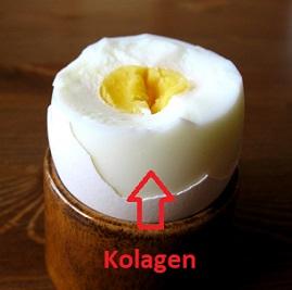 Vaječný bílek je dobrým zdrojem kolagenu.