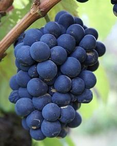 Některé druhy ovoce obsahují hodně sacharidů.