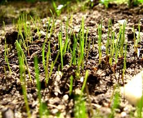 Na jaře si zkuste dát klíčky. Obsahují mnoho živin, které na jaře potřebujete.
