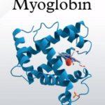 Myoglobin – co to je a k čemu je v těle dobrý?