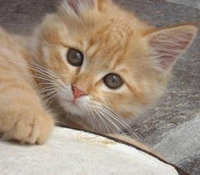 Vypadá nevinně, že? Nenechte se zmást, kočky nebo i psi mohou přenášet nebezpečné nemoci.