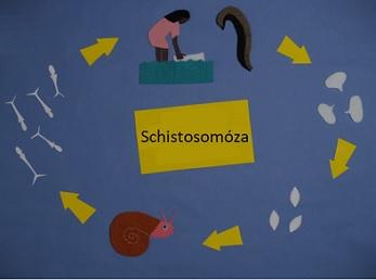 Schistosomóza, také známá jako bilharzióza či schistosomiáza, je onemocnění způsobené parazitárními červy.