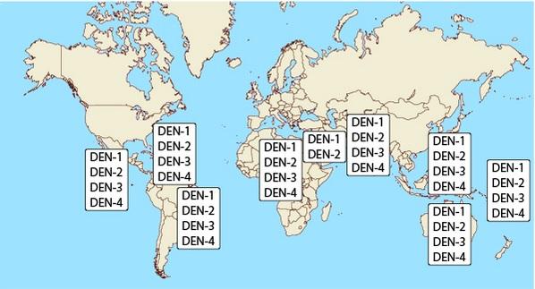 Rozmístění sérotypů viru dengue