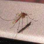 Západonilská horečka – příznaky, příčiny a léčba