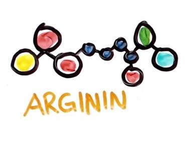 Na co je v těle dobrý L-arginin a jaké má účinky?