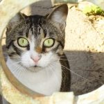 Bartonelóza – nemoc z kočičího škrábnutí – příznaky a léčba