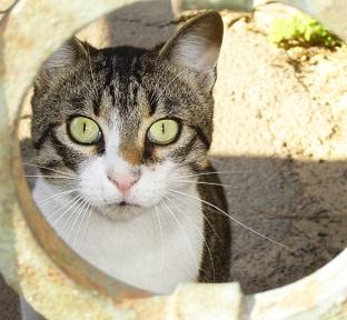 Bartonelózu často přenášejí kočky. Ale i jiná zvířata, jako klíšťata a podobně.