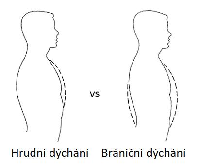 Rozdíl mezi bráničním a hrudním dýcháním.