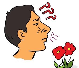 Jedním z příznaků Kalmannova syndromu je nepřítomnost čichu (nebo velmi špatný čich).