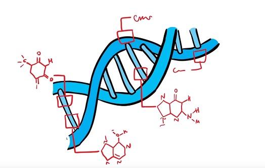 Kallmannův syndrom je genetické onemocnění.