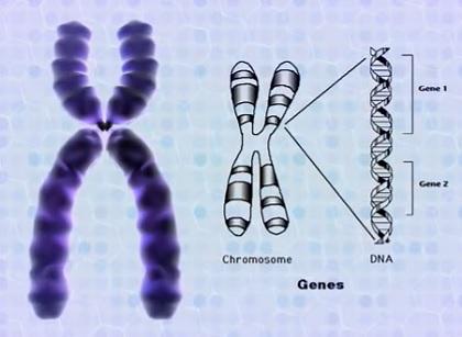 Syndrom křehkého (fragilního) chromozomu X - příznaky, příčiny a léčba