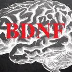 8 způsobů, jak zvýšit hladinu BDNF a udržet mozek stále mladý