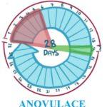Anovulace – co je to? Příznaky, příčiny a léčba