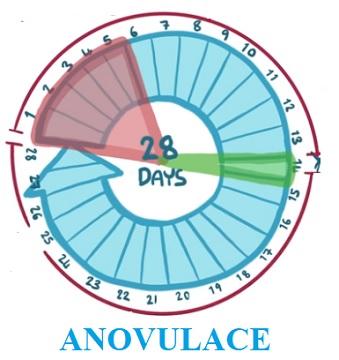 Anovulace je označení menstruačního cyklu, při kterém nedochází k ovulaci.