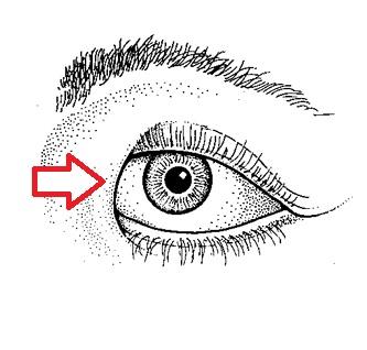 Epikantus. Označení kožní řasy, která překrývá vnitřní koutek oka.