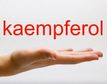 Kaempferol a jeho účinky a přínosy pro naše zdraví
