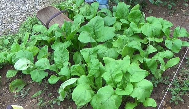 Takto vypadá při pěstování.