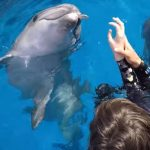 Delfínoterapie neboli terapie s delfíny – jaké může mít účinky na zdraví?