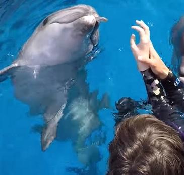 Delfíni mohou pomoci s uzdravováním či se zdravotními stavy, jako je Downův syndrom a podobně.