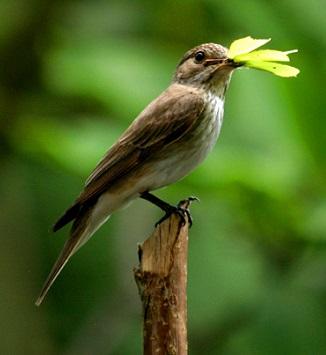 Ornitoterapie - co je to a jaké má účinky na zdraví?