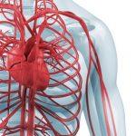 Bradyarytmie (pomalá tepová frekvence) – co je to a jak na tyto poruchy? Příznaky, příčiny a léčba