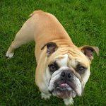 Pokousání psem: Co dělat, aby tato nepříjemnost nepotkala vaše dítě?