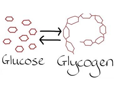 Toto onemocnění je způsobeno nahromaděním glykogenu ve svalech. Glykogen shromažďuje energii, ze které se postupně uvolňuje glukóza (jednoduchý cukr) do krevního oběhu.
