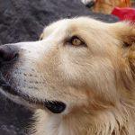 Alergie na psy – co ji způsobuje a jak ji léčit?