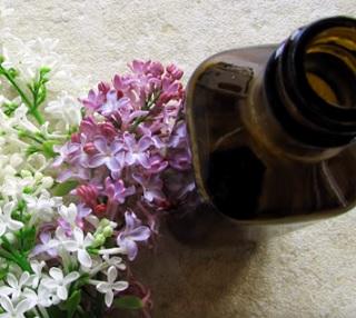 Šeřík a šeříkový olej - jaké mají účinky na naše zdraví?