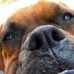 Ano, váš pes skutečně vycítí, když jste stresovaní