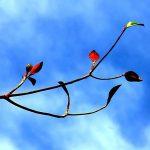 Podzimní stres & úzkost – proč se můžete v tomto období cítit více stresovaní?