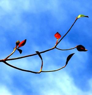 Někdo má podzim rád, někdo z něj cítí úzkost a stres.