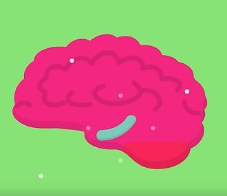 Dle některých studií je neurogeneze možná v hippocampu.