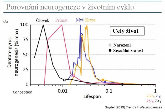 Porovnání neurogenezí