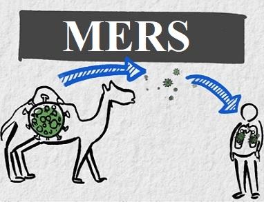 MERS mohl z velbloudů přejít na člověka