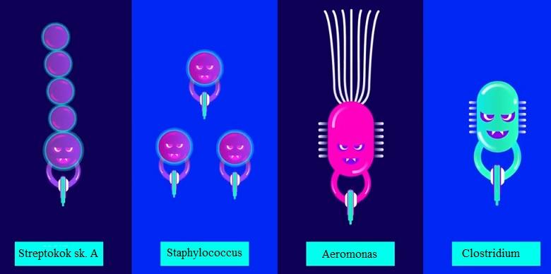 Tyto bakterie způsobují nekrotizující fasciitidu