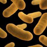 Yersinióza a bakterie Yersinia enterocolitica – co je to – příznaky, příčiny a léčba