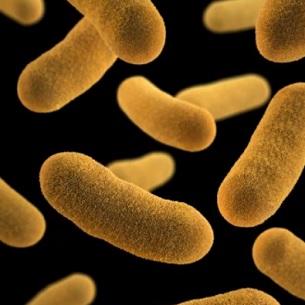 Yersinióza a bakterie Yersinia enterocolitica - co je to - příznaky, příčiny a léčba